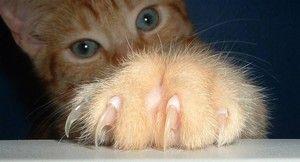 рудий кошеня