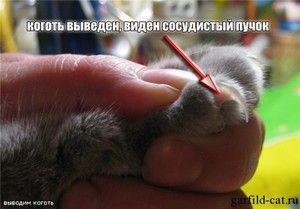 Стрижем кігті кошеняті