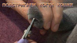 Подстригаем кігті кішці