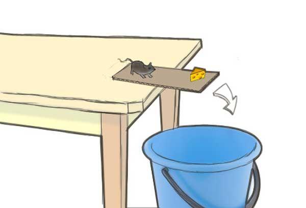 пастка з відром і миша, яка намагається взяти сир (малюнок)