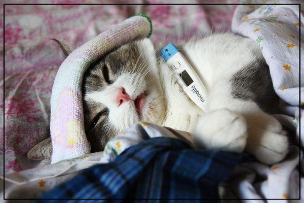 Кішка з градусником