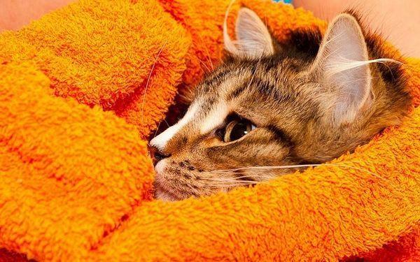 Котка в кърпа
