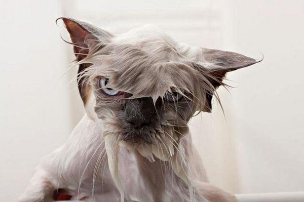 Недоволна мокра котка