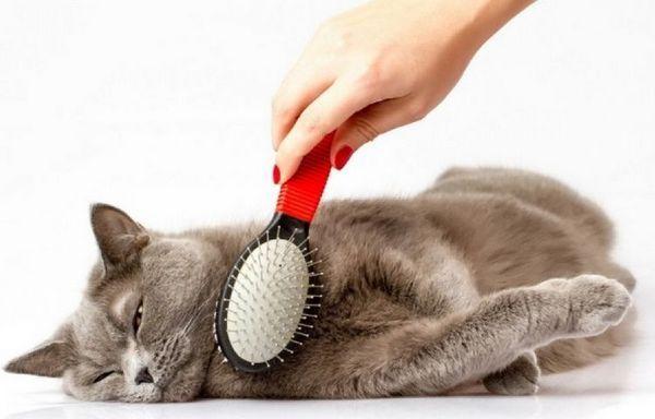Гребена котка