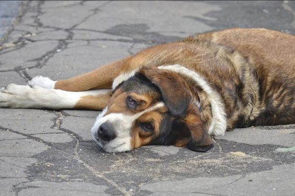 Куче на тротоара