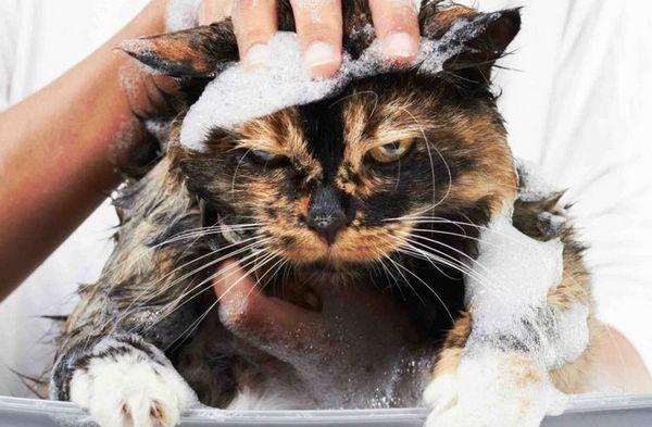 Злий кіт в мильній піні