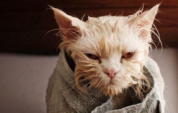 Мокрий кіт в рушник
