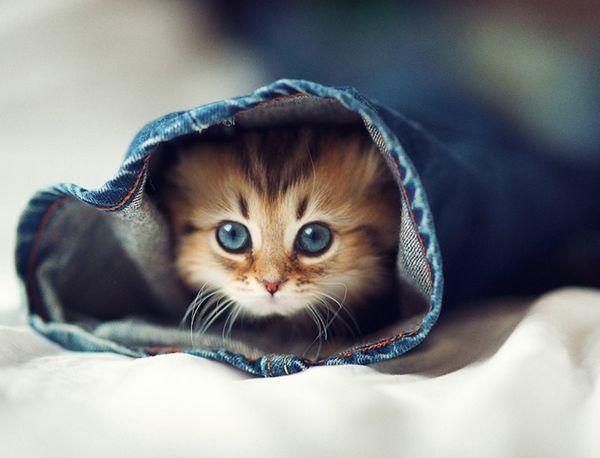 Миле кошеня