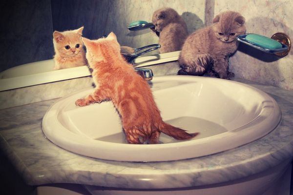 Купання кошеня в раковині