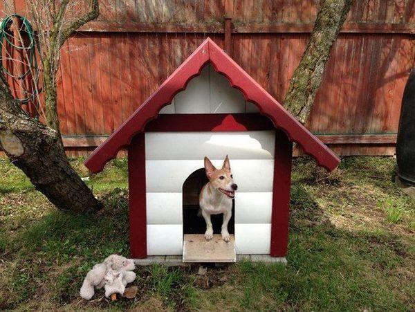 будка для собаки, собака, будка, будинок для собаки, де ставити будку, з чого робити будку, як побудувати будку,