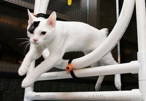 Як правильно дресирувати кота