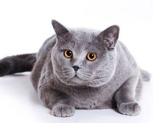 Які є команди для кішок