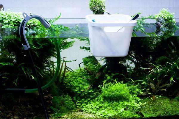 Заміна води в акваріумі