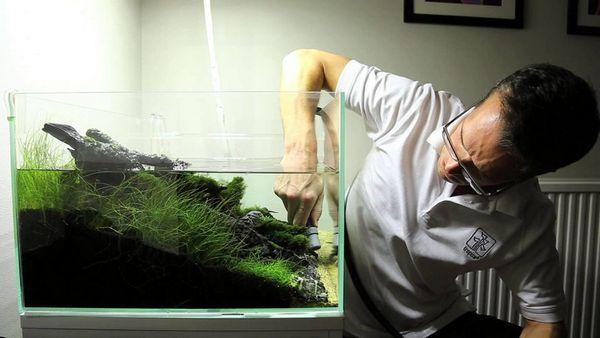 Перед заливанням обов`язково потрібно переконатися, що підготовлена вода такої ж температури, як і та, що була в акваріумі спочатку
