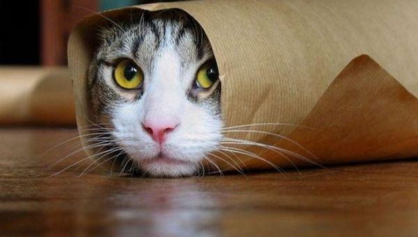 Кот загорнутий в папір