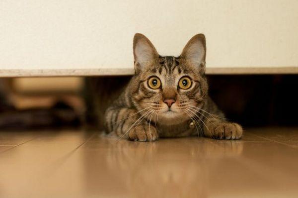 Кот визирає з-під дверей