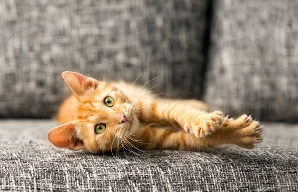 Котик лежить на дивані