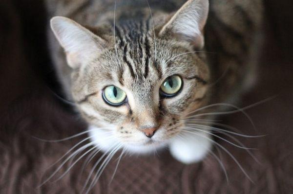 Кот дивиться наверх