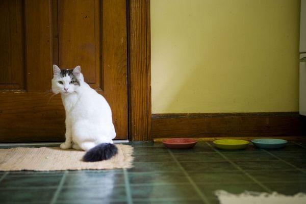 Кіт сидить біля дверей