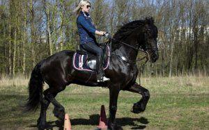 Як правильно осідлати коня