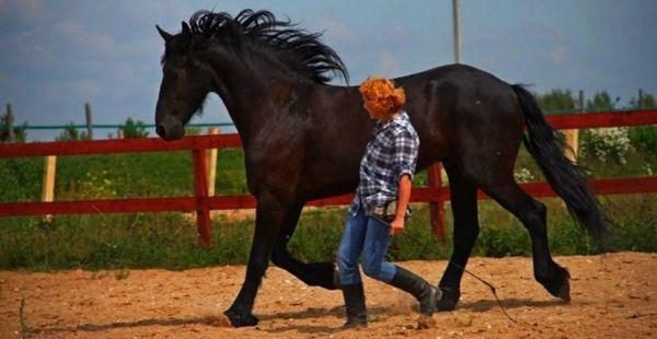 дикий кінь