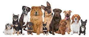Ліки для собак