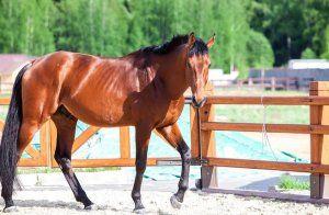 Як правильно утримувати коня в домашніх умовах