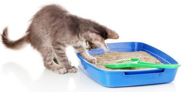Не забирайте відразу випорожнення, нехай кошеня запам`ятає місце по запаху