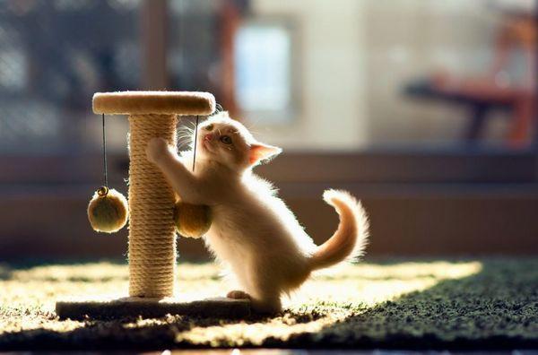 Як правильно виховувати кошеняти, кота чи кішку ласкавими і ручними