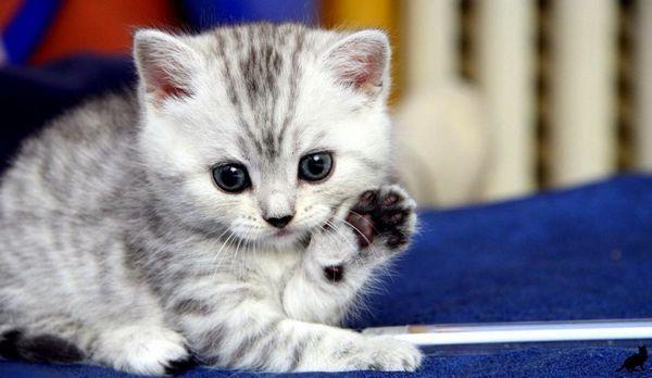 Кошеня - це дитина з шерстю і хвостом, значить, ставитися до нього треба відповідно.