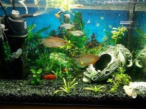 Фільтри для акваріумів