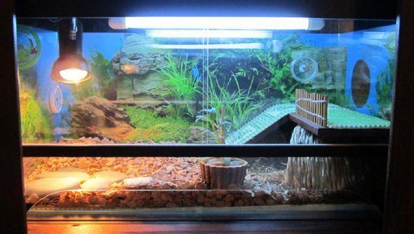 Як правильно вибрати УФ лампу для черепах