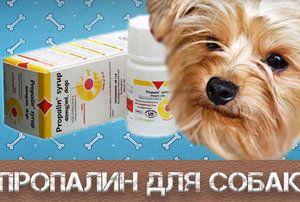 Як застосовувати «Пропалін» для собак