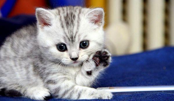 Як привчити кішку до лотка в квартирі легко і швидко якщо вона все одно ходить всюди в туалет