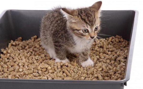 Кошеня в лотку з деревним наповнювачем