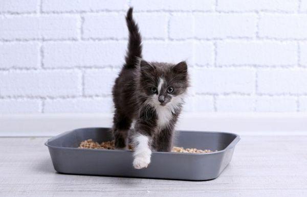 Чорно-біле кошеня в лотку