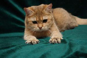 Кішка хоче поточити кігті