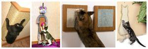Різноманітність котячих когтеточек