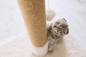 Котик хоче залізти на когтеточку