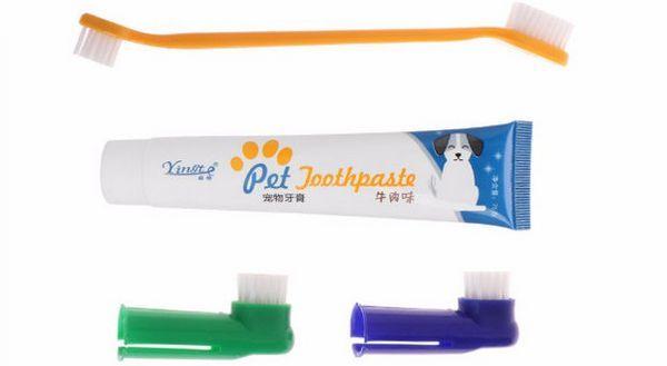 Як привчити собаку чистити зуби