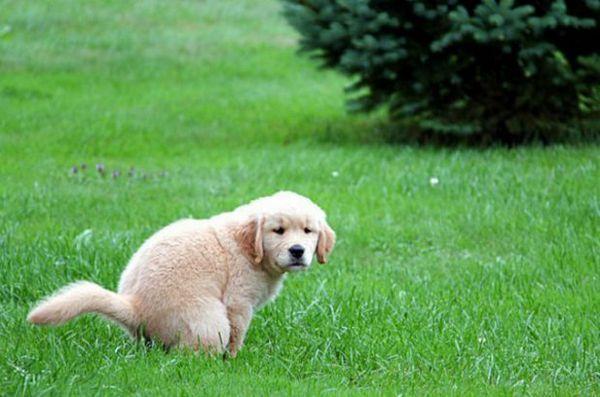 Собака на прогулянці