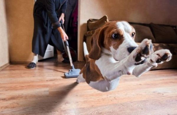 Прибирання після собаки