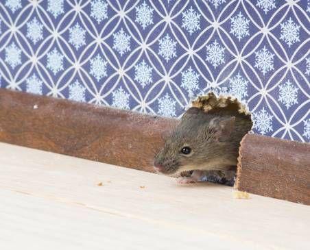 мишачий лаз