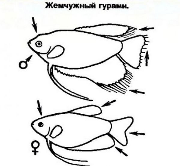 Самка і самець