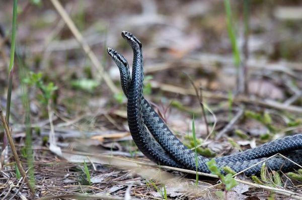 Párenie hadov