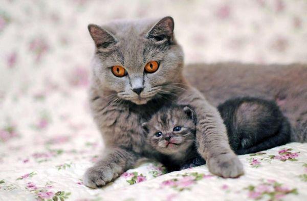 Щаслива мама