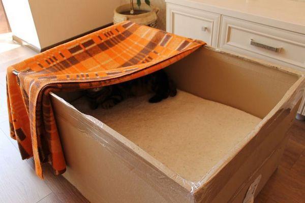 Вагітна кішка в коробці