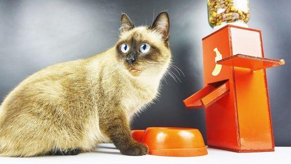 Автогодівниці для кішки
