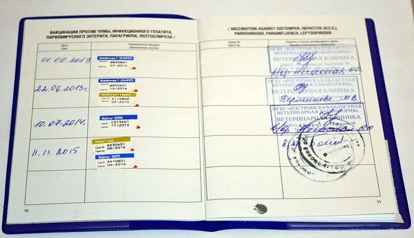 Ветеринарен паспорт на куче