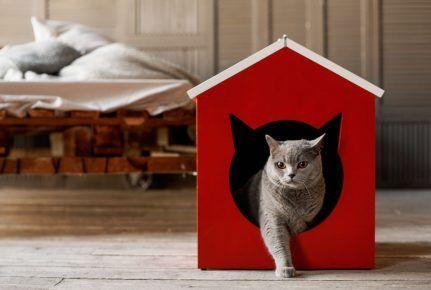 Кішка виходить з будиночка